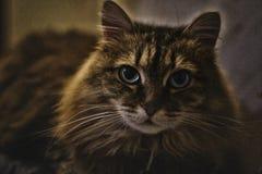 Bella Cat On lo strato Gatto sveglio Fotografie Stock