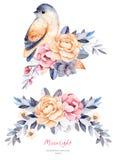 Bella collezione invernale con i rami, piante di cotone, fiori, piccolo uccello Immagine Stock