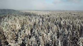 Bella collina bianca con gli alberi di inverno archivi video