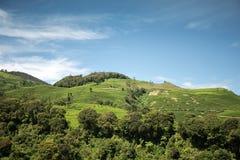 Bella collina con cielo blu Immagine Stock