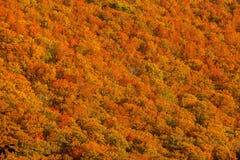 Bella collina della montagna della valle con gli alberi variopinti stagionali nel Giappone Fotografia Stock Libera da Diritti