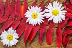 Bella composizione in autunno su fondo di legno Fotografia Stock Libera da Diritti