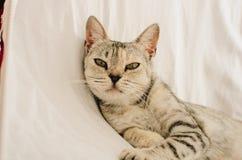 Bella condizione del gatto immagine stock libera da diritti