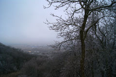 Bella copertura della foresta decidua della montagna con molta nebbia con l'albero del gelo su a fuoco anteriore Fotografie Stock Libere da Diritti