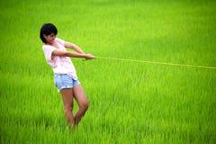 Bella corda di trazione della ragazza nel campo di risaia Immagini Stock