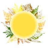 Bella corona dei bolli delle foglie degli alberi e dei fiori con la c Fotografie Stock Libere da Diritti