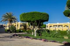 Bella corona rotonda spettacolare dell'albero dell'alloro sul vicolo verde con i fiori e le palme Fotografie Stock
