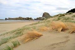 Bella costa Castlepoint della Nuova Zelanda fotografia stock libera da diritti