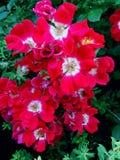 Bella crescita di fiori di estate fotografie stock