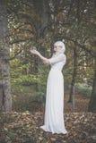 Bella donna alta dell'indovino nel legno Immagini Stock Libere da Diritti