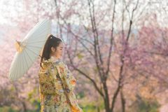 Bella donna asiatica che indossa il fiore giapponese tradizionale di ciliegia e del kimono in primavera, Giappone fotografia stock