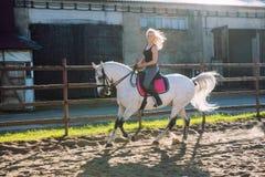 Bella donna bionda che monta un cavallo Fotografia Stock