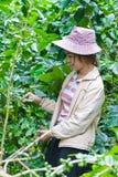 Bella donna che lavora nel giardino del caffè. Fotografia Stock