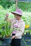 Bella donna che lavora nell'azienda agricola dell'orchidea. Fotografia Stock
