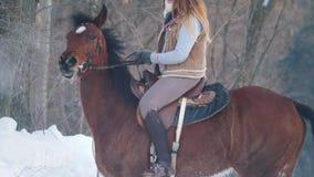 Bella donna dai capelli lunghi professionale che monta un cavallo nero attraverso la neve profonda nella foresta, stallone indipe video d archivio