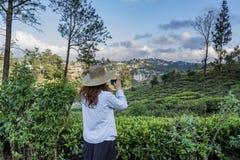 Bella donna nel cappello che prende foto delle piantagioni di tè facendo uso del telefono immagine stock libera da diritti