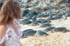 Bella donna vicino ad un grande gruppo di tartarughe marine verdi immagine stock libera da diritti