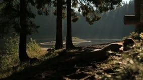 Bella e crisalide misteriosa della foresta che prende il sole sul sole nella foresta della montagna in Carpathians archivi video