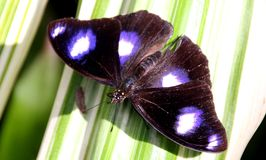 Bella e farfalla sveglia Fotografie Stock