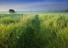 Bella ed alba calma. immagini stock libere da diritti
