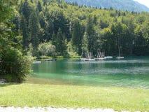Bella erba al fiume del lago Bohinj Fotografie Stock Libere da Diritti