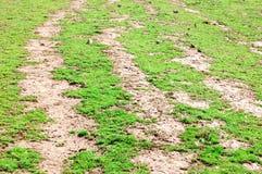 Bella erba con colore piacevole Fotografia Stock Libera da Diritti