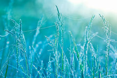 Bella erba con le gocce di acqua Profondità del campo poco profonda Immagine Stock Libera da Diritti
