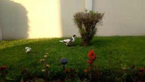 Bella erba di mattina immagini stock