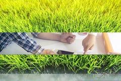 Bella erba verde Fotografie Stock
