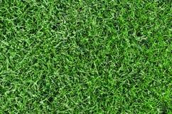 Bella erba verde Fotografia Stock