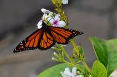 Bella erba verde del fiore e della farfalla Fotografie Stock Libere da Diritti