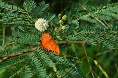 Bella erba verde del fiore e della farfalla Fotografie Stock