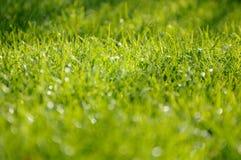 Bella erba verde lunga Fotografie Stock Libere da Diritti
