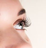 Bella estensione del ciglio della giovane donna Occhio della donna con i cigli lunghi Concetto del salone di bellezza Immagine Stock