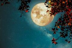 Bella fantasia di autunno immagini stock