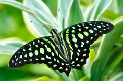 Bella farfalla Fotografia Stock Libera da Diritti