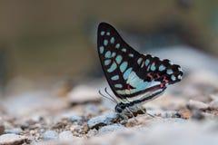 Bella farfalla Immagine Stock Libera da Diritti