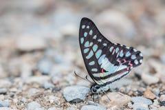 Bella farfalla Immagine Stock