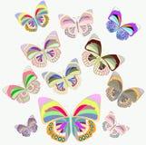 Bella farfalla Illustrazione di Stock