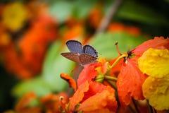 Bella farfalla al fiore Fotografia Stock Libera da Diritti