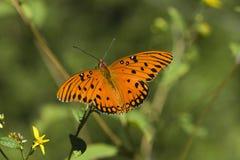 Bella farfalla arancione Fotografia Stock Libera da Diritti