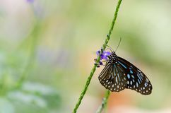 Bella farfalla che riposa sul fiore fotografia stock