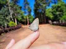 Bella farfalla che si siede sul dito della ragazza Fotografie Stock Libere da Diritti