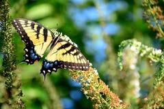 Bella farfalla dalla natura Immagini Stock Libere da Diritti