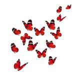 Bella farfalla di monarca immagini stock libere da diritti