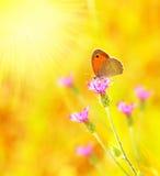 Bella farfalla gialla Fotografia Stock