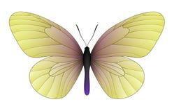 Bella farfalla isolata su un fondo bianco Immagine Stock
