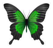 Bella farfalla isolata su un fondo bianco Fotografia Stock Libera da Diritti