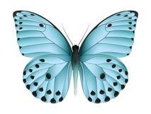 Bella farfalla isolata su un fondo bianco Fotografie Stock Libere da Diritti