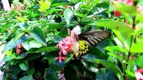 Bella farfalla nel giardino Bangkok del giardino stock footage